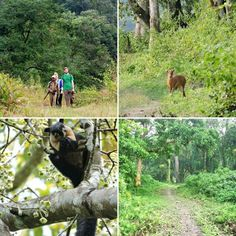 Jungle walk and wildlife trails of Northeast India.
