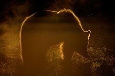 Photo On fire..... par Edwin Kats on 500px
