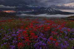 Mount Saint Helens,Washington – Miles Morgan.  Hope we get to see wildflowers like these!