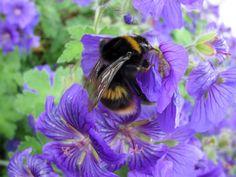 Bumble Bee 2016