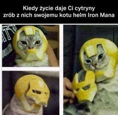Read Nota Para Mis Aun No Lectores Xdxd from the story Momos Kules :v by TheKillerDoblas (♡) with reads. Top Funny, Funny Cute, Funny Cat Pictures, Funny Photos, Be Like Bro, Polish Memes, Snoopy Cartoon, Iron Man Helmet, Bollywood Memes