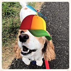 Gracie, what's up?  #hotdiggity #hotdiggityPDX #dogsofportland #dogsofPDX #portlanddogs #pdxdogs #pdxpups #portlandpups #dogwalker #dogwalkersPDX #portlanddogwalker #dogstagram #cutedog #dogsofinstagram #petsofinstagram #petstagram #funnydog
