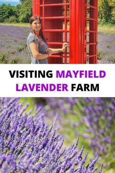 Mayfield Lavender Farm is a great day trip from London, it is one of the lavender fields near London easy accessible by public transport.  | Mayfield Lavender Farm | Mayfield Lavender Fields | Mayfield Lavender Farm photography | Mayfield Lavender Farm London | London Lavender Fields | Lavender Fields in London | lavender field London | English Lavender | #visitengland #england #lavender #lavenderfarm #lavenderfield #unitedkingdom