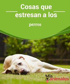 Love My Dog, Mavis, Ohana, Pet Health, Chihuahua, Boston Terrier, Dog Cat, Best Friends, Puppies