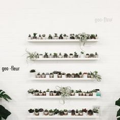 "1,236 Likes, 4 Comments - geo-fleur©™ (@geo_fleur) on Instagram: ""#TBT to our first #plantshelfie • geo-fleur.com #geofleur •"""