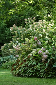 Les massifs décoratifs - botanic®