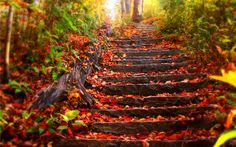 Top Autumn Wallpaper Stair Red Leaves Forest