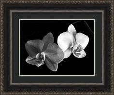 Framed Artwork, Framed Prints, Canvas Prints, Wall Art, Art Market, Fine Art Photography, Fine Art America, Orchids, Fine Art Prints