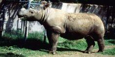petition: Act Now to Save the Sumatran Rhino