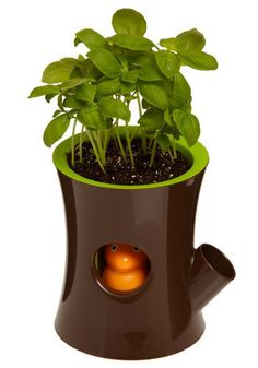Thirsty Squirrel Self-Watering Plant Pot. Squirrel bobbles up to show his face when you water your plant :) Mint Plants, Water Plants, Potted Plants, Indoor Plants, Mint Plant Care, Self Watering Plants, Cute Room Decor, Office Plants, Vintage Decor