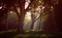 Dancing trees by Tatiana Avdjiev on 500px