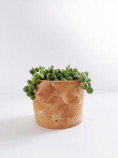Plaster Boobie Planter Terracotta Planter Only Ceramic Plant Pots, Clay Pots, Clay Planter, Ceramic Flower Pots, Succulent Pots, Succulents, Pottery Pots, Plant Aesthetic, Painted Pots