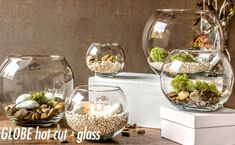 Clear Glass Vases, Terrarium, Table Decorations, Furniture, Home Decor, Terrariums, Decoration Home, Room Decor, Home Furnishings