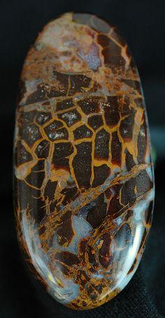 natural stone:   petrified wood