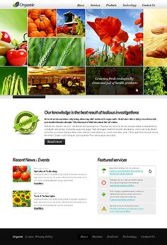 Website Template #36857