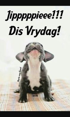 French Bulldog puppy - I can make a lot of noise Funny Animals, Cute Animals, Pets 3, Funny Pets, Cute French Bulldog, French Bulldogs, Good Morning Inspirational Quotes, Natural Baby, Beautiful Creatures