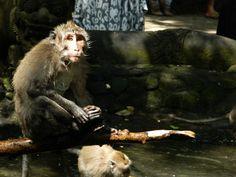 Monkey Temple of Bali by simranjoanne