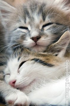 nothing warms my heart like kittens. especially long-haired cuties. the top one reminds me of Doodles :o).