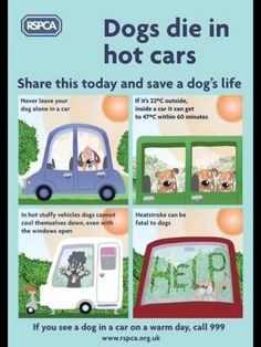 Dogs die in hot cars - share this today and save a dog's life. If you see a dog in a car on a warm day, call RSPCA Training Tips, Dog Training, Dog In Heat, Dog Died, Save A Dog, Pet Health, Health Tips, Dog Care, Dog Owners