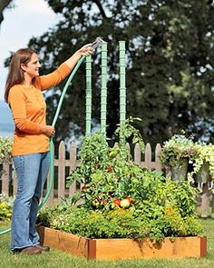 Tips for Watering Tomatoes Deep for Awesome Results