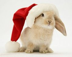 sweet little Christmas bunny <3