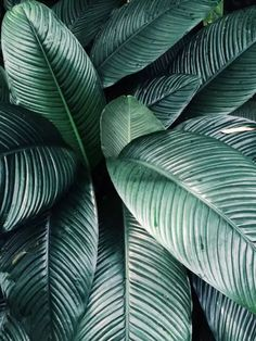 New plants green leaves texture ideas Plant Texture, Green Texture, Leaf Texture, Texture Art, Cool Plants, Green Plants, Tropical Plants, Green Leaves, Plant Leaves