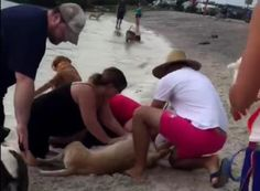 Perfect strangers (emphasis on perfect!) took turns giving #CPR to a yellow Lab who started drowning at a Tampa dog beach. #heroes