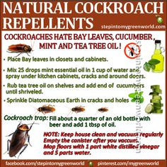 All natural  cockroach repellents