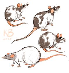 Rat sketches! by Kelly Brown, via Behance