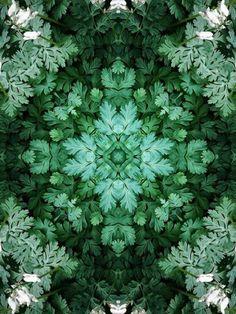 Geometrisch patroon van bladeren