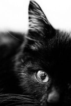 eye   by MakiEni777
