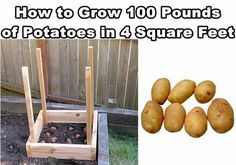 How to Grow 100 Pounds of Potatoes in Four Square Feet #diy #gardening