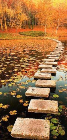 Autumn - Lipnik Park near Ruse, Bulgaria: Fall and a winding path, nice combo!