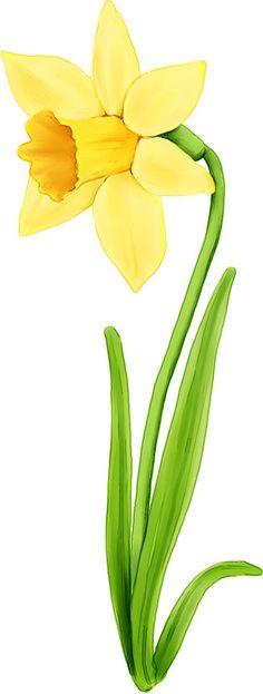 Daffodils - image samples