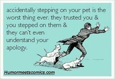 Poor pets
