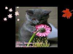 POZDRAWIAM WIECZOREM - YouTube Film, Cats, Youtube, Animals, Movie, Gatos, Animales, Film Stock, Animaux