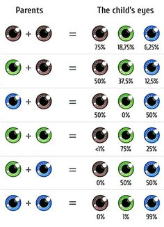 Choose your baby's eye color. The Fertility Institutes offers eye color screening and selection. Eye Color Facts, Eye Facts, Eye Color Chart Genetics, Daily Contact Lenses, Eye Lens Colour, Vitreous Humour, Eye Quotes, Self Treatment, Eye Pictures