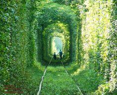 Tunnel of Love, Terowong Kereta Api Cinta di Ukraine