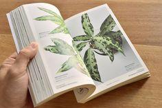MIST LOVERS -Rainforest Plants- /KEISUKE HASEを追...