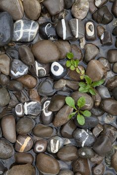 Collects stones with letters and complete alphabet in 10 years