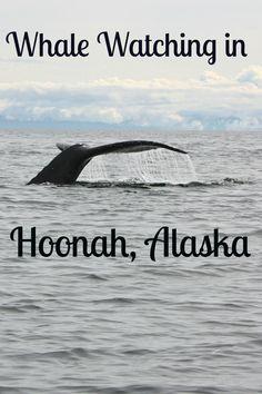 Whale Watching in Hoonah, Alaska