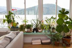 15x Eucalyptus Huis : 344 best leafy greens images on pinterest indoor house plants