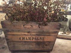 Cassa antica di bottiglie di champagne riadattata a fioriera