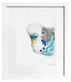 Budgie watercolour by stefan gevers