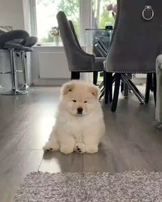 Any dogs and puppies that are cute. See more ideas about Cute Dogs, Cute puppies Tags: Baby Animals Super Cute, Cute Baby Dogs, Cute Little Puppies, Cute Little Animals, Cute Funny Animals, Cute Cats, Fluffy Dogs, Fluffy Animals, Cute Husky Puppies