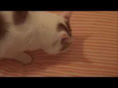 funny cat video makes a big jump With Slowmotion