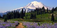 Mount Rainier National Park lodging, events, hiking, and other activities for the Mt. Rainier area