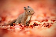 squirrel in autumn by Kim Partridge on 500px