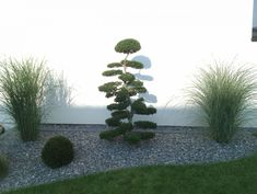 Tree – Sierentz (Haut Rhin – – August 2014 - All About Landscaping With Rocks, Landscaping Plants, Front Yard Landscaping, Japan Garden, Plantation, Plant Design, Outdoor Gardens, Patio, Landscape