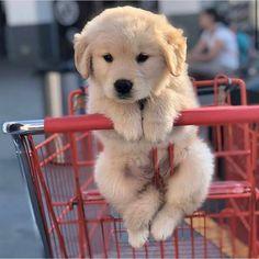 Super Cute Puppies, Cute Baby Dogs, Cute Little Puppies, Cute Funny Dogs, Super Cute Animals, Cute Dogs And Puppies, Cute Little Animals, Cute Funny Animals, Doggies